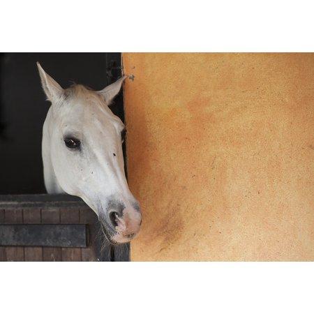 LAMINATED POSTER Portrait Horse Animal Nature Mammal Ride Cute Poster Print 24 x 36