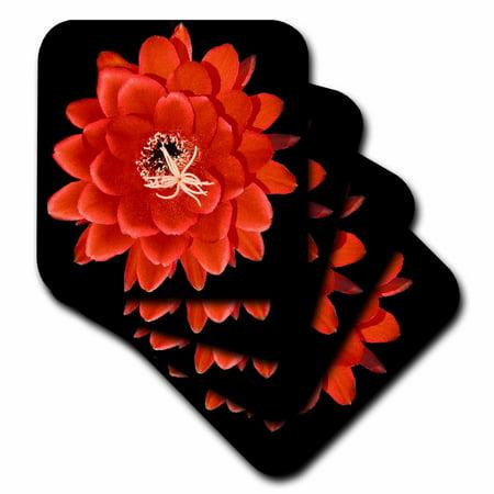 - 3dRose Decorative colorful garden botanic classic plant SW Southwest Desert cactus red black flower, Soft Coasters, set of 4