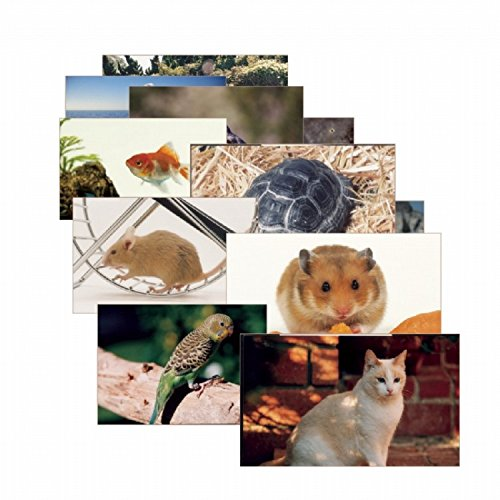 Materials Toddler Education Pets Posters for Class Real Photo Decor for Preschool Bulletin Boards & Circle... by