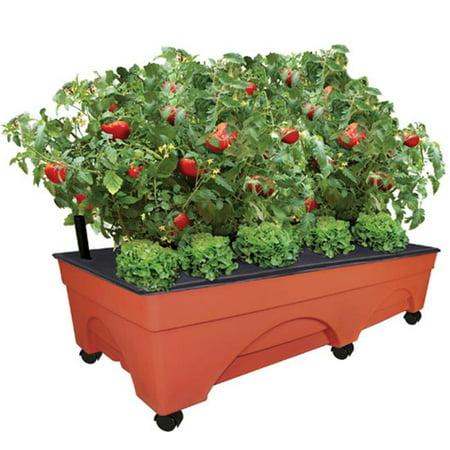 EmscoGroup 3340 Big City Pickers Raised-Garden Kit Display - Walmart.com