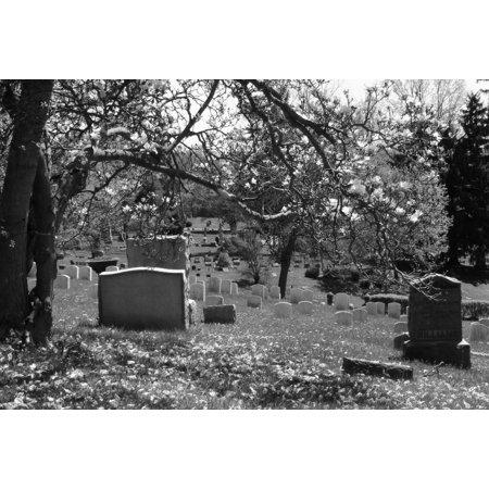 Framed Art for Your Wall Magnolia Tree Gravestone Cemetery Graveyard 10x13 Frame](Gravestones For Sale)