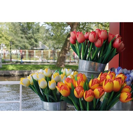 - LAMINATED POSTER Tulips Wood River Holland Nature Red Flowers Poster 24x16 Adhesive Decal
