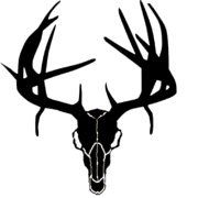 Western Recreation Buck Skull W/Drop Tines 6X6
