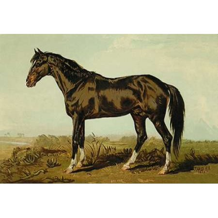 Dongola Horse 1900 Canvas Art - Samuel Sidney (24 x 36)