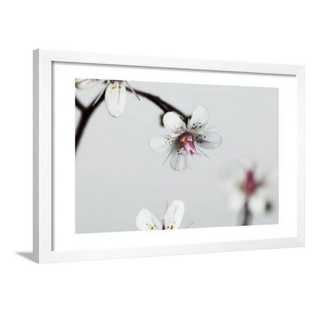 Little Flowers on Grey Framed Print Wall Art By Tom Quartermaine