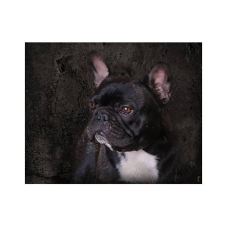 Black French Bulldog Portrait Print Wall Art By Jai Johnson