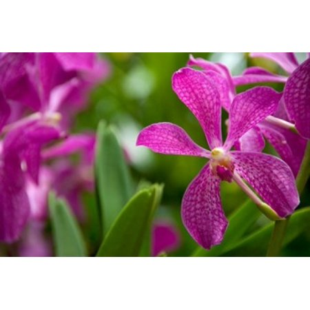 Singapore National Orchid Garden Poster Print by Cindy Miller Hopkins