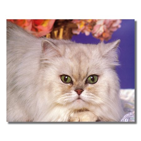 Green Eye Silver Persian Kitten Cat Close Up Photo Wall Picture 8x10 Art Print - Eyes Light Up