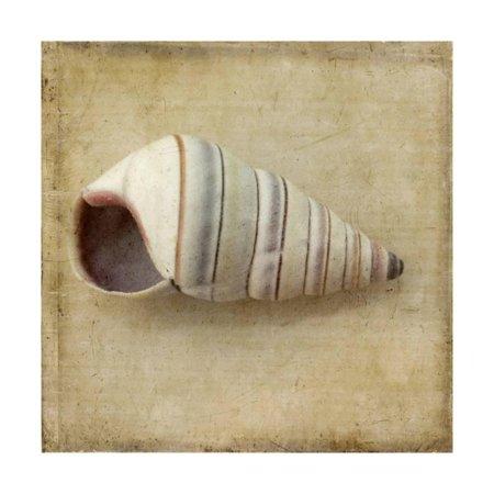 Sepia Shell IV Print Wall Art By Judy Stalus (Sepia Shell)