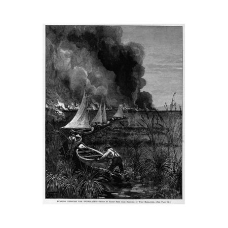 Pushing through the Everglades. Drawn by Harry Fenn from Sketches by Ward Harlander. See Page 183. Print Wall Art