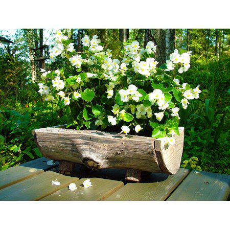 Laminated Poster Garden Wooden Plant Pot White Flower Poster Print 24 x 36