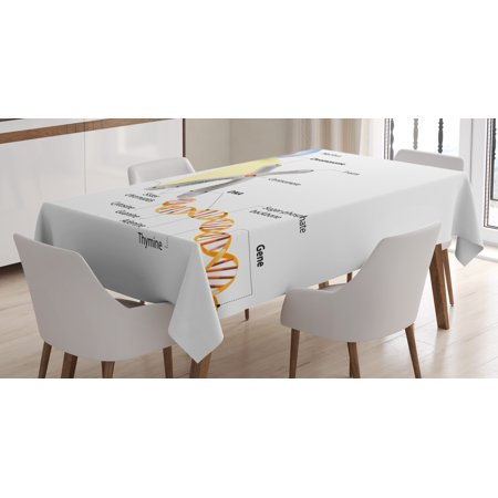 Educational Tablecloth  Cell Chromosome Dna Gene Genome Study Double Helix Evolution Science Research  Rectangular Table Cover For Dining Room Kitchen  52 X 70 Inches  Multicolor  By Ambesonne
