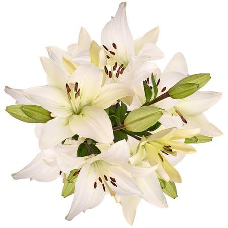 Natural fresh flowers white la hybrid lilies 40 stems walmart natural fresh flowers white la hybrid lilies 40 stems mightylinksfo