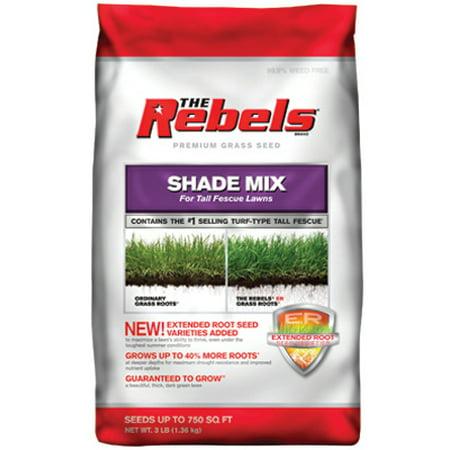Pennington The Rebels 3 LB Tall Fescue Shade Mix Grass