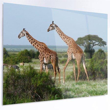 Design Art 'Two Giraffes in African Savannah' Photographic Print on (Savannah Two Metal)