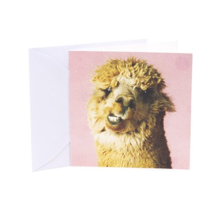 Hallmark Studio Ink Birthday Greeting Card (Alpaca) ()
