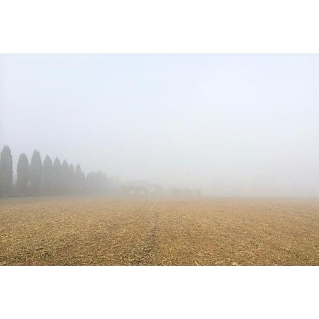 Canvas Print Cloud Trees Field Backyard Sky Farm Plant Stretched Canvas 32 x