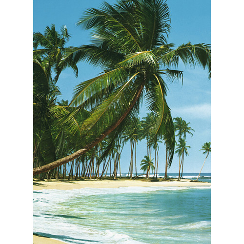 Brewster Home Fashions Ideal Decor South Sea Wall Mural