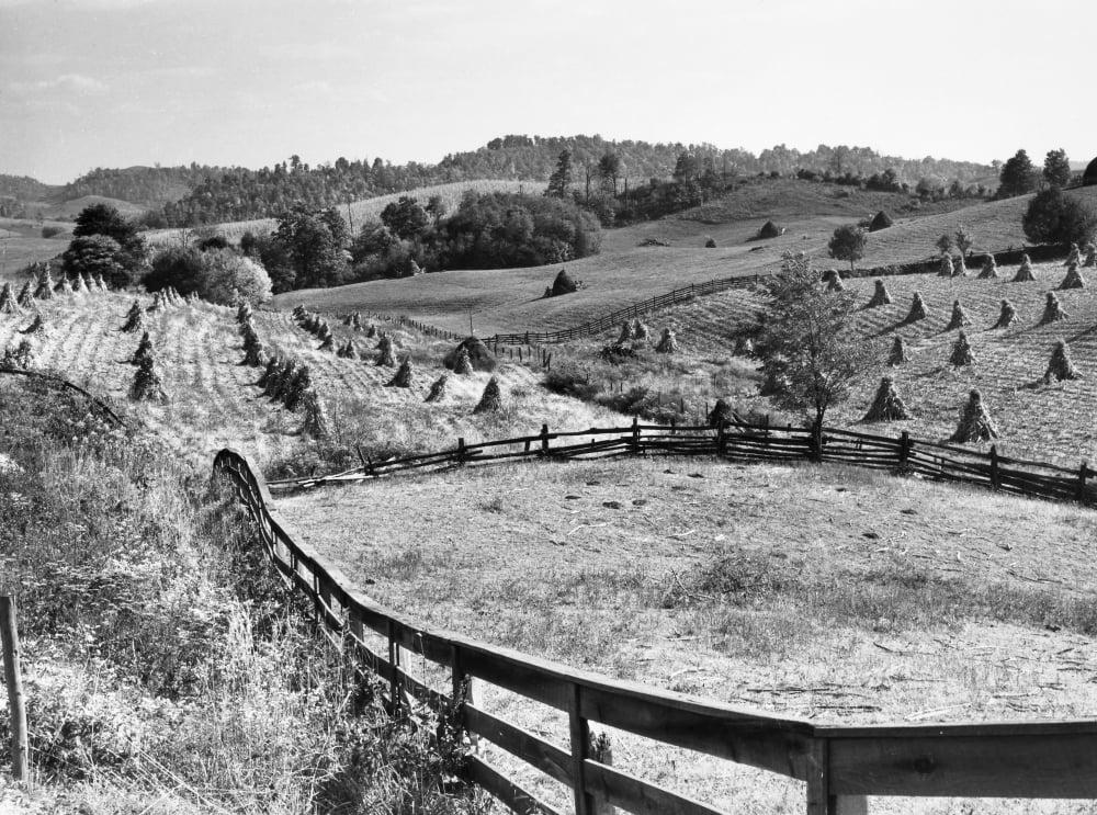 Corn Field 1940 Ncorn Shocks And Fences On A Farm Near Marion Virginia Photograph By Marion Post ...
