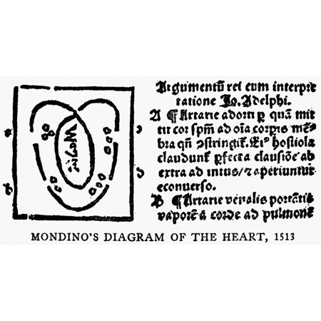 Human Heart 1513 Nmondino De LuzziS Diagram Of The Human Heart Woodcut 1513 Poster Print by Granger (Diagram Of Human Heart For Class 10)