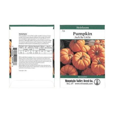 Pumpkin Garden Seeds - Jack Be Little - 2 Gram Packet - Non-GMO, Heirloom Pumpkins - Deep Orange - Vegetable Gardening Seeds
