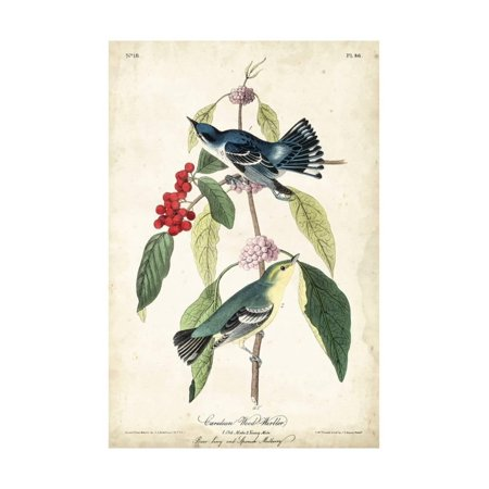 - Cerulean Wood Warbler Bird Vintage Animal Art Print Wall Art By John James Audubon