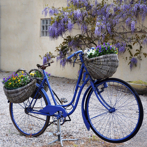 West of the Wind Blue Bike Outdoor Canvas Wall Art