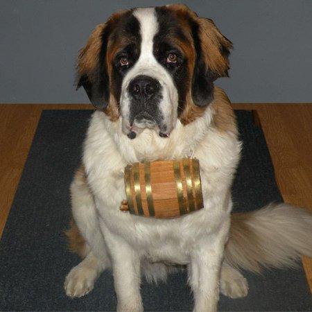 - Saint Bernard Dog Collar Wood Barrel - Half Liter - Brass