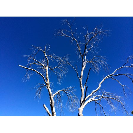 LAMINATED POSTER Tree Nature Plant Environment Forest Sky Blue Poster Print 24 x 36