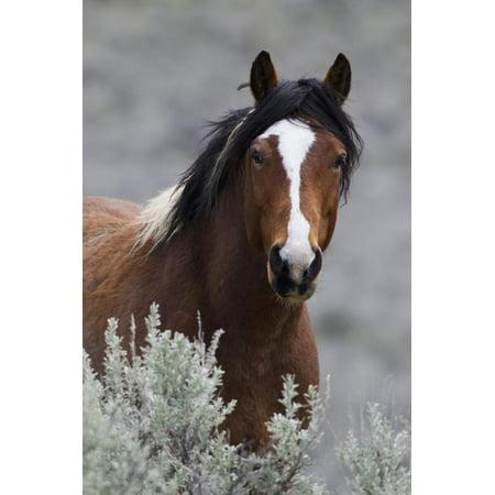 Wild Horses, Steens Mountains Photography Print Wall Art By Ken Archer