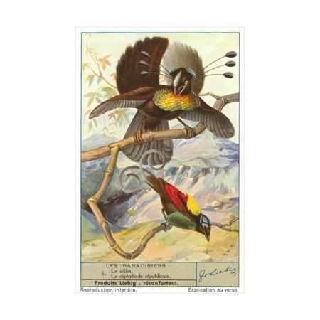 Birds of Paradise Print Wall Art