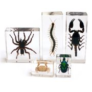 Arthropod Collection 5pc Set