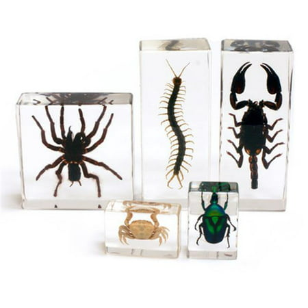 Ed Speldy East BFK1202 Biology for Kids - All About Arthropod