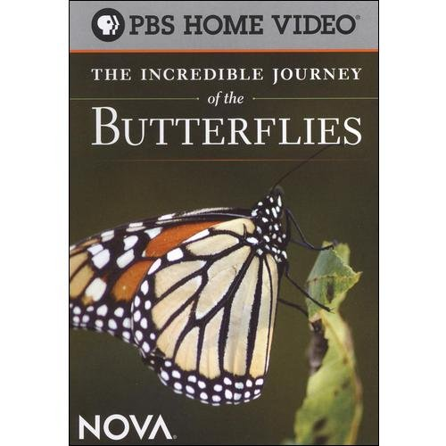 NOVA: The Incredible Journey Of The Butterflies