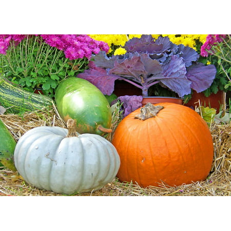 LAMINATED POSTER Gourds Halloween Flowers Fall Autumn Hay Pumpkin Poster Print 24 x 36