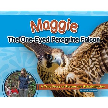 Maggie the One-Eyed Peregrine Falcon - eBook (A Peregrine Falcon Dives At A Pigeon)