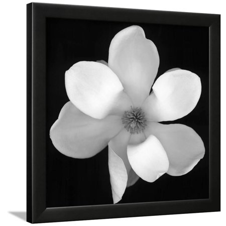 Black And White Magnolia Flower Floral Photography Framed Print Wall