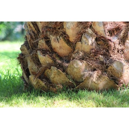Canvas Print Palm Nature Tree Trunk Palm Tree Stretched Canvas 10 x 14 ()
