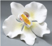 Cake Decoration Gum Paste Orchid