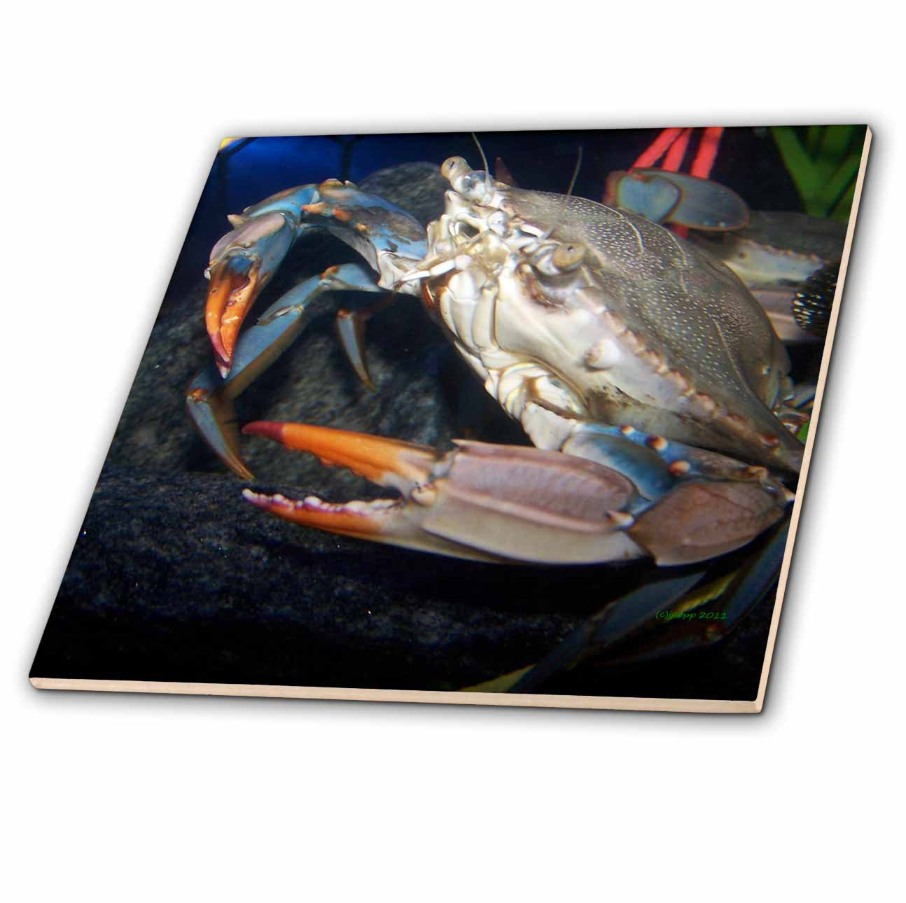 3dRose crab - Ceramic Tile, 6-inch
