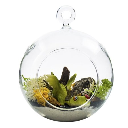 Terrarium Kit | Ferocious Dragon with Ladybug | Dragon Series | Complete Terrarium Gift Set | 4