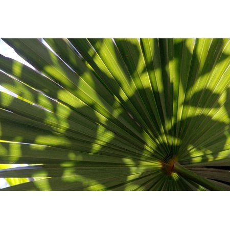LAMINATED POSTER Palm Green Leaf Palm Fronds Plant Wedel Poster Print 24 x 36
