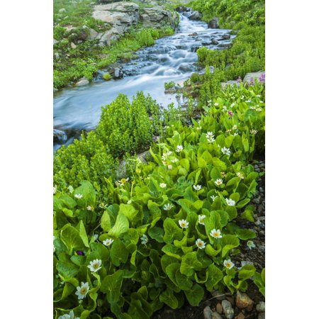 Colorado Cascade - USA, Colorado, San Juan Mountains. Stream Cascade and Spring Marigolds Print Wall Art By Jaynes Gallery
