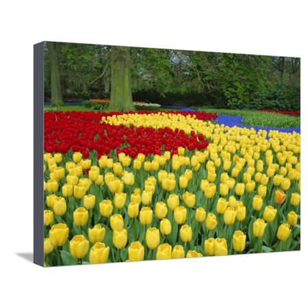 Tulips, Keukenhof Gardens, Netherlands Stretched Canvas Print Wall ...