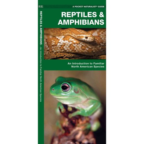 Reptiles and Amphibians: A Folding Pocket Guide to Familiar North American Species