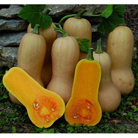 Squash Butternut, Waltham - packet - Butternut Squash Halloween Recipe