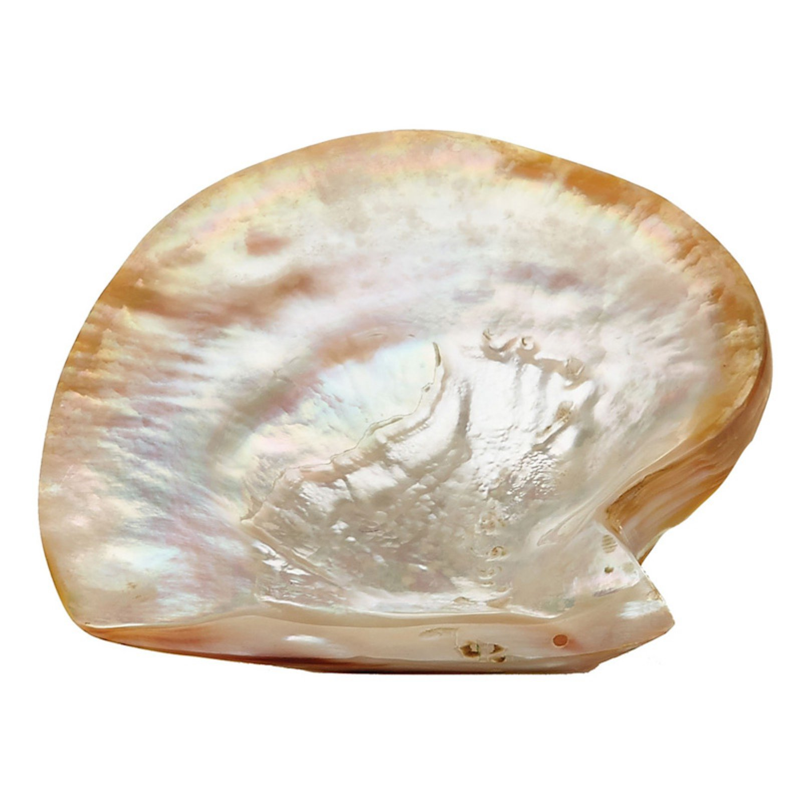 Dimond Home Pearl Shell Plate