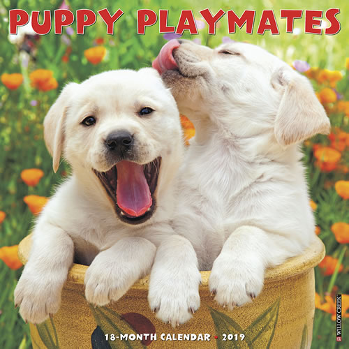 Willow Creek Press 2019 Puppy Playmates Wall Calendar