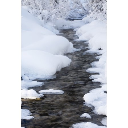 Open Running Creek With Snow Covered Banks And Frost On The Trees Lake Louise Alberta Canada Canvas Art   Michael Interisano  Design Pics  12 X 19