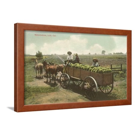 Watermelon in Cart, Lodi, California Framed Print Wall Art ()